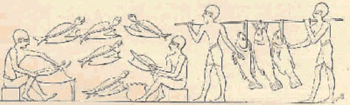 An ancient Egyptian Fishery.