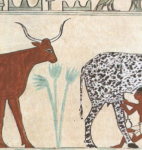 Egyptian hieroglyphic of a domesticated animal (cow being milked).