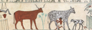Egyptian hieroglyphic of a cow being milked.