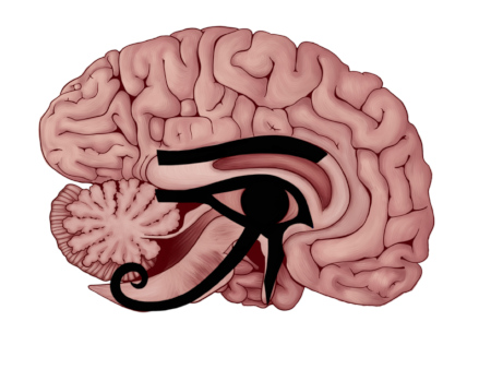 The Eye of Horus superimposed over the midsagittal section of the brain.