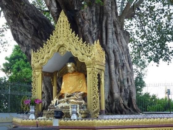 Buddha's tree shrine.