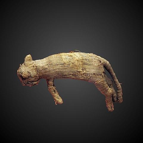 Ancient Egyptian cat mummy.