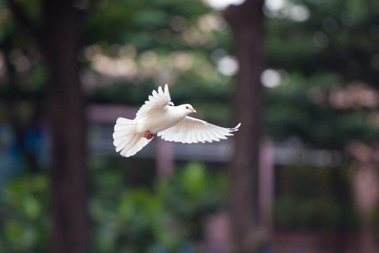 Flying dove / Bird peace symbol