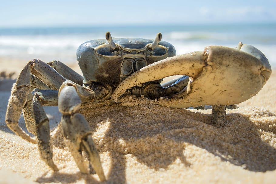 Symbol of Cancer / Crab.