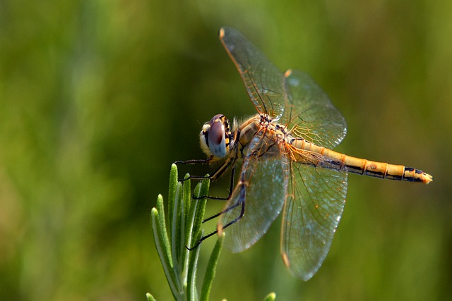 Dragonfly / Native American symbol of joy.