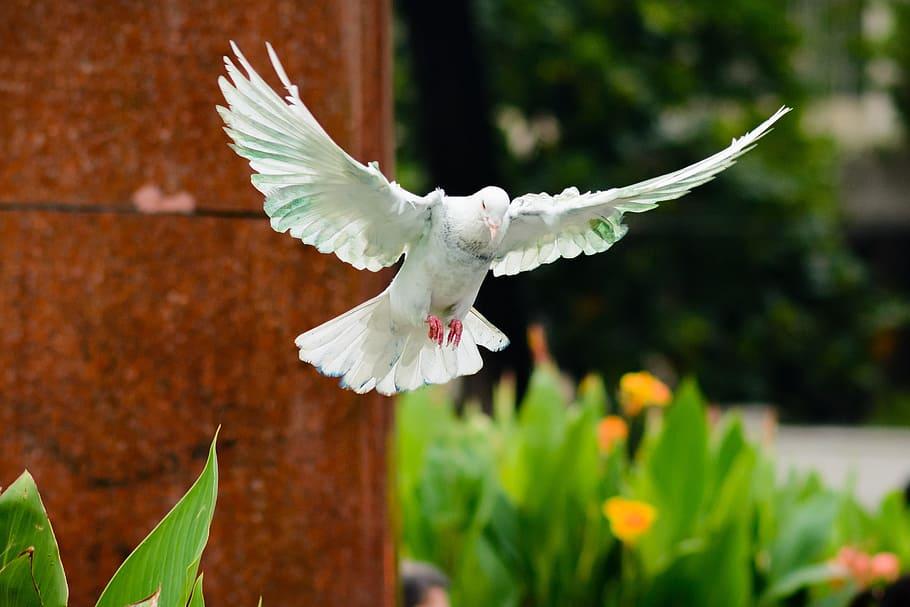 Flying dove / Bird symbol of hope.