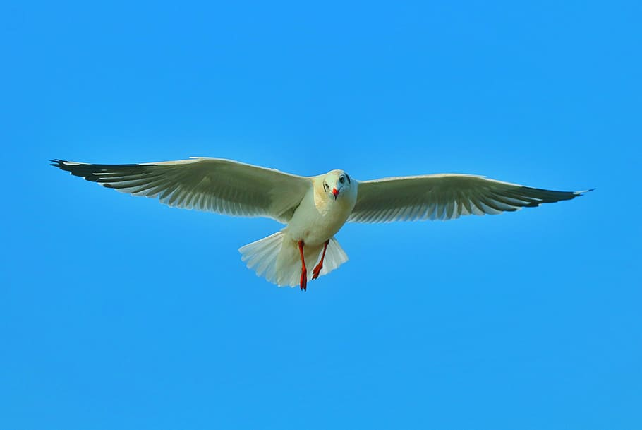 Bird as a symbol of freedom / Flying seabird  .