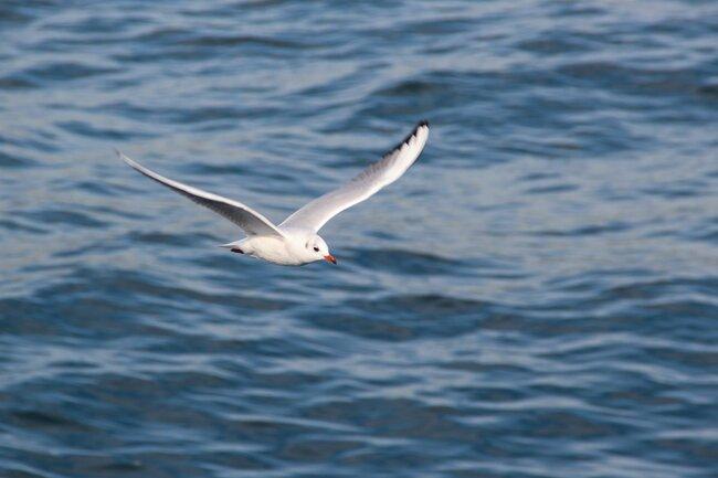 Symbol of the Seas / Flying seabird .