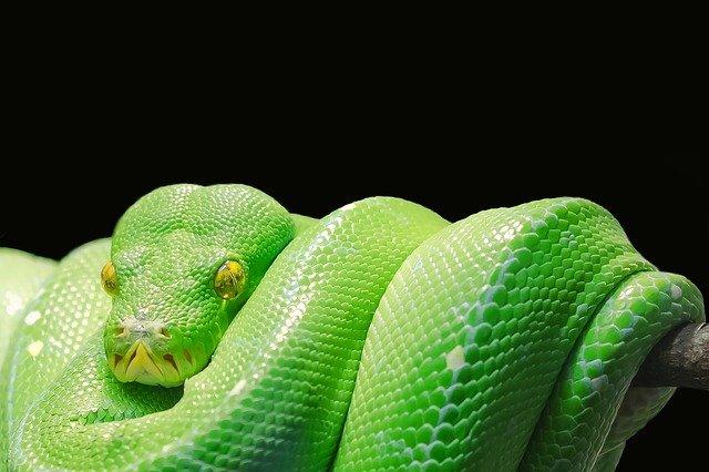 Serpent symbol of water / Green snake.