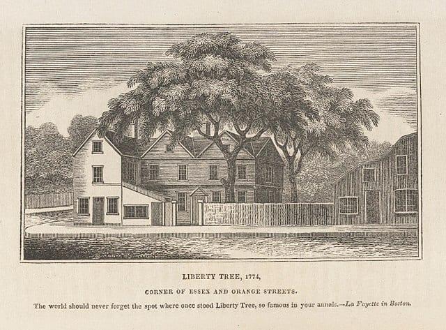 US Freedom Tree / Liberty Tree .