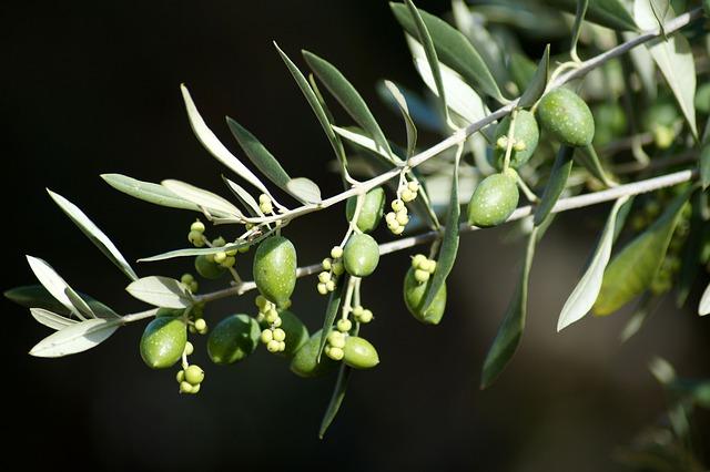 Olive branch / Tree symbol of hope.