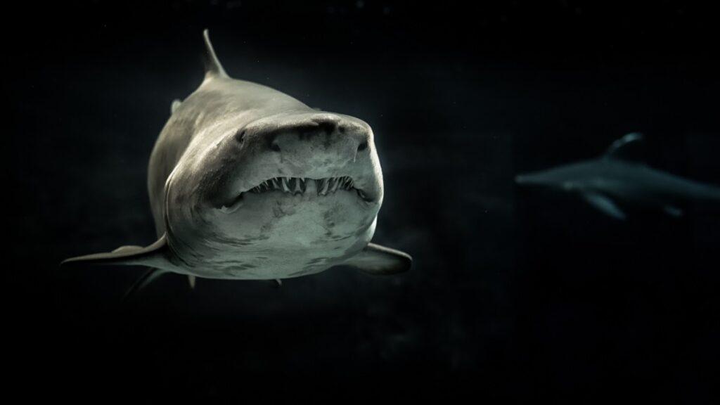 Symbol of the sea deity / Shark.