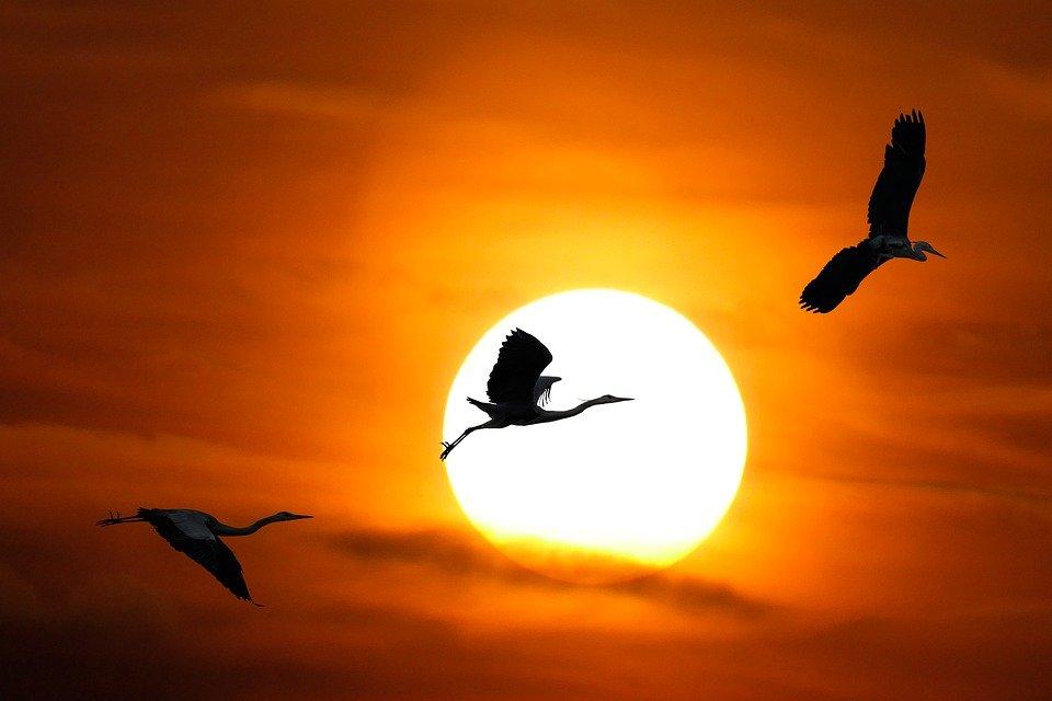 Shining sun / Symbol of Utu.