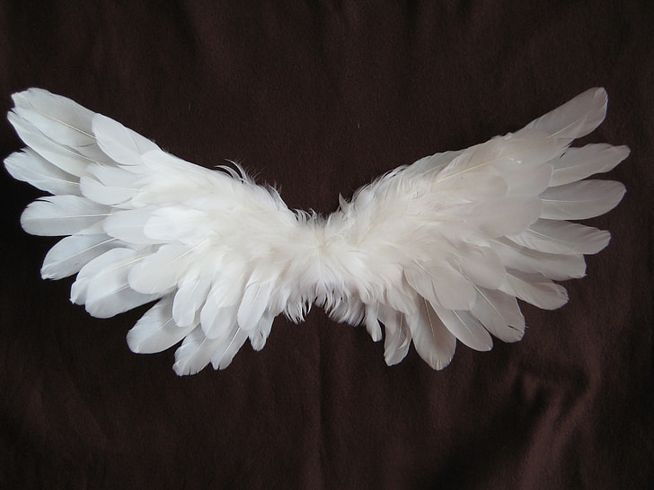 Wings as freedom symbol.