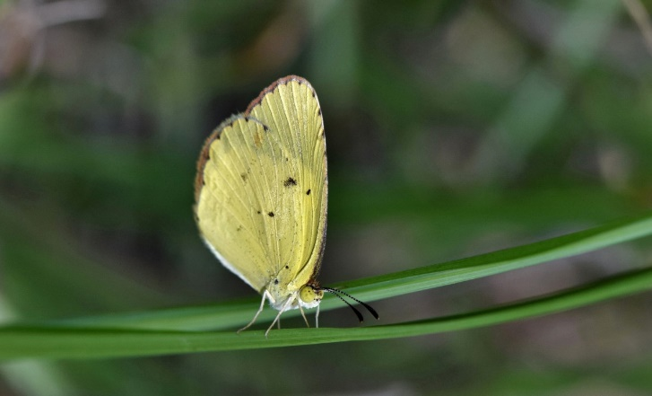 Yellow butterfly / Insect hope and faith symbol.