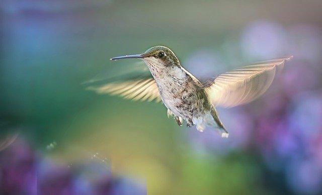Feng Shui good luck bird symbol / hummingbird.