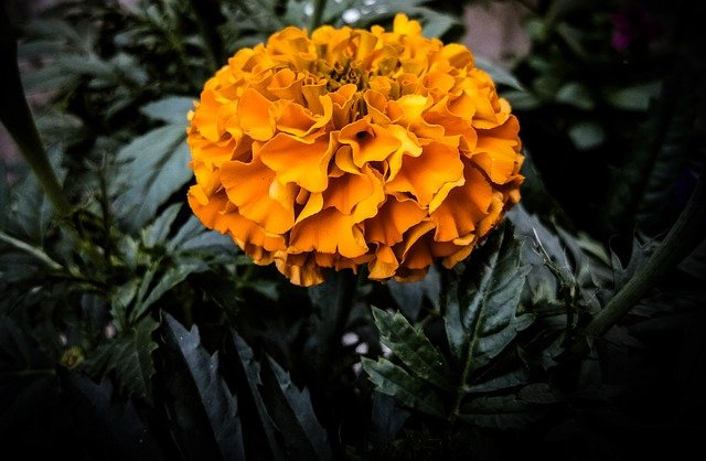 Symbol of Tlaloc / Marigold flower.