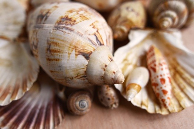 Shells as a symbol of water / Seashells.