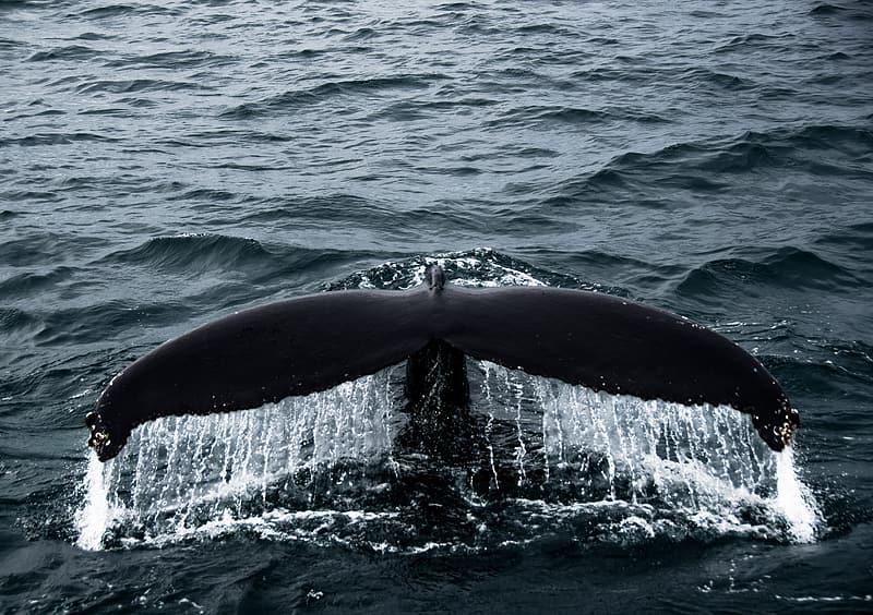 Symbol of Tangaroa / Whale.