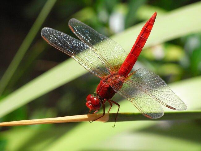Dragonfly on plant stalk.