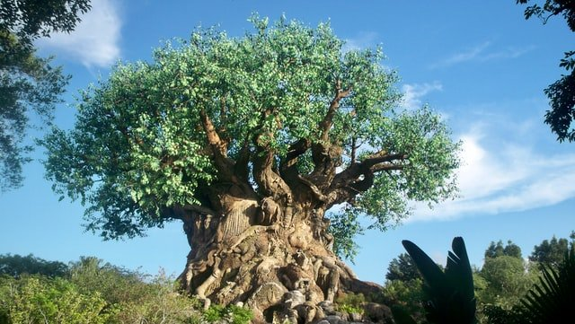 The tree of life represents rebirth and new beginnings.