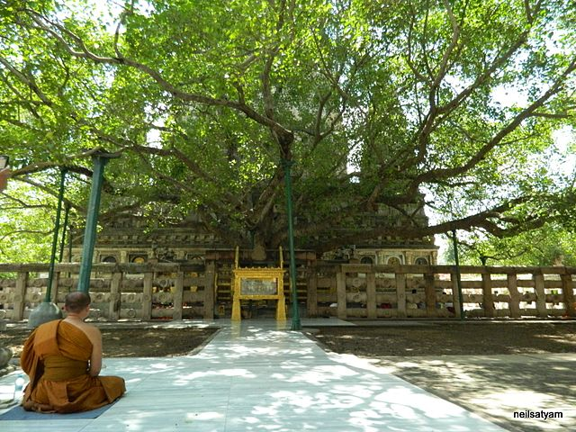 The Bodhi Tree.